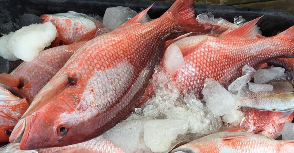 Red Snapper Fishing Trips